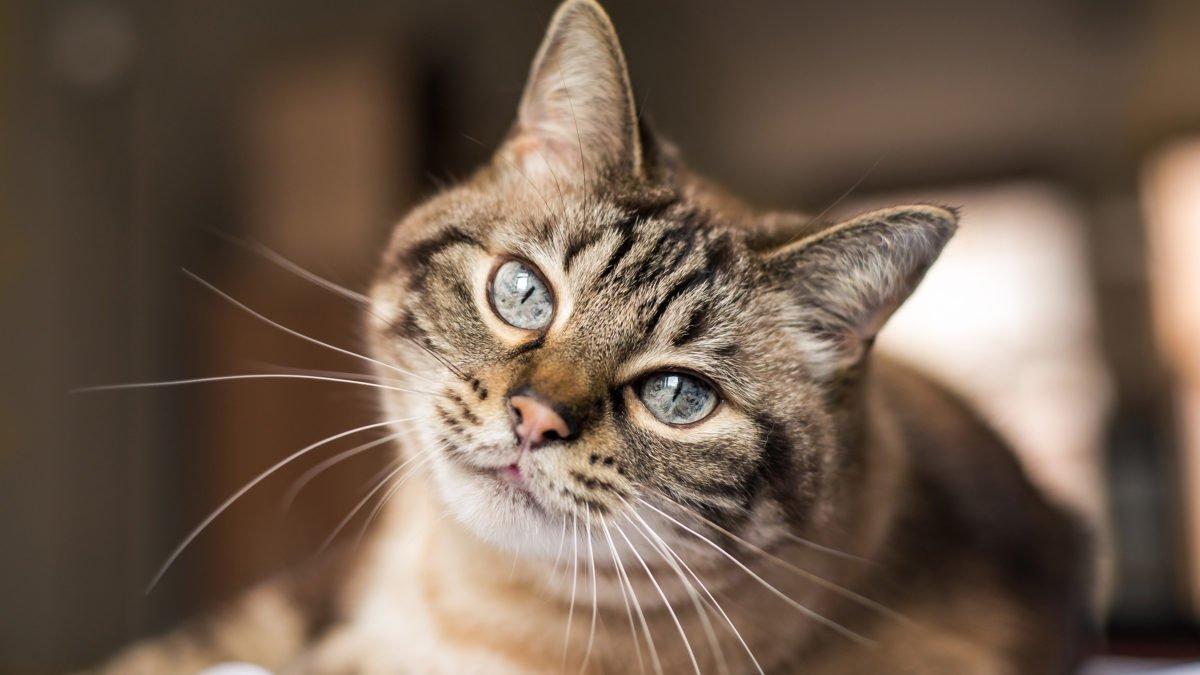Zona Kucing