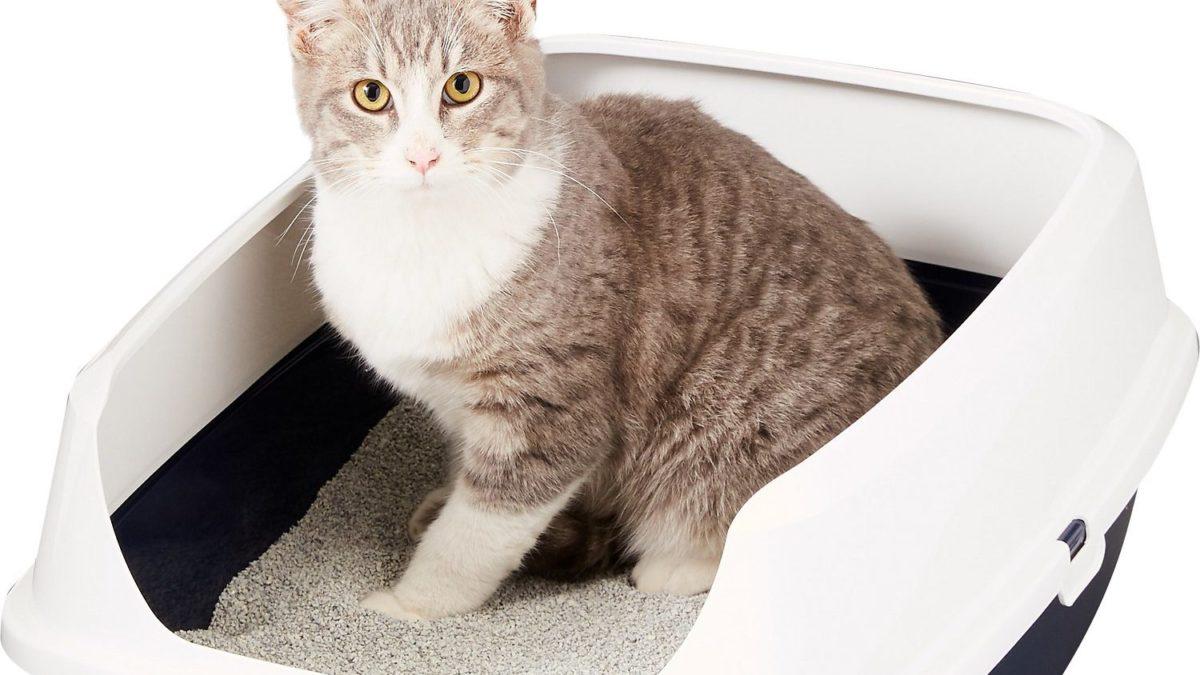 Litter Box Kucing