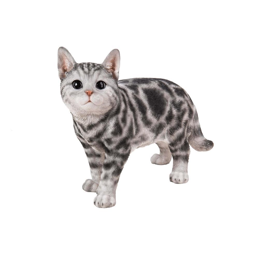 kucing lucu kucing american shorthair