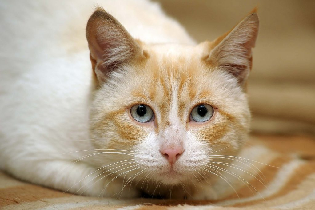 6 Penyebab kucing mencret