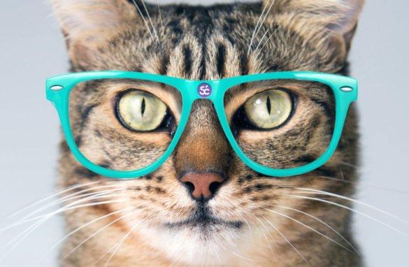 Review Vitagel Vitamin Kucing