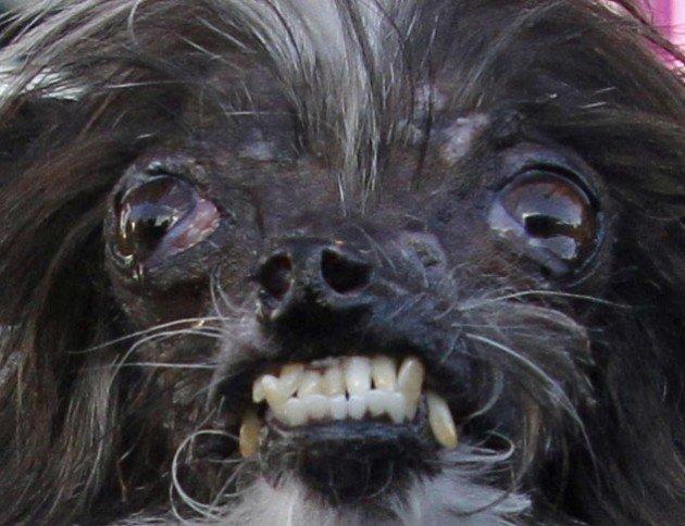 Anjing peanut