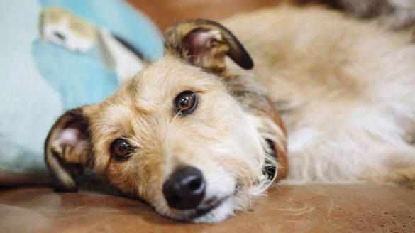 35+ Anjing ras daur hidup anjing terupdate