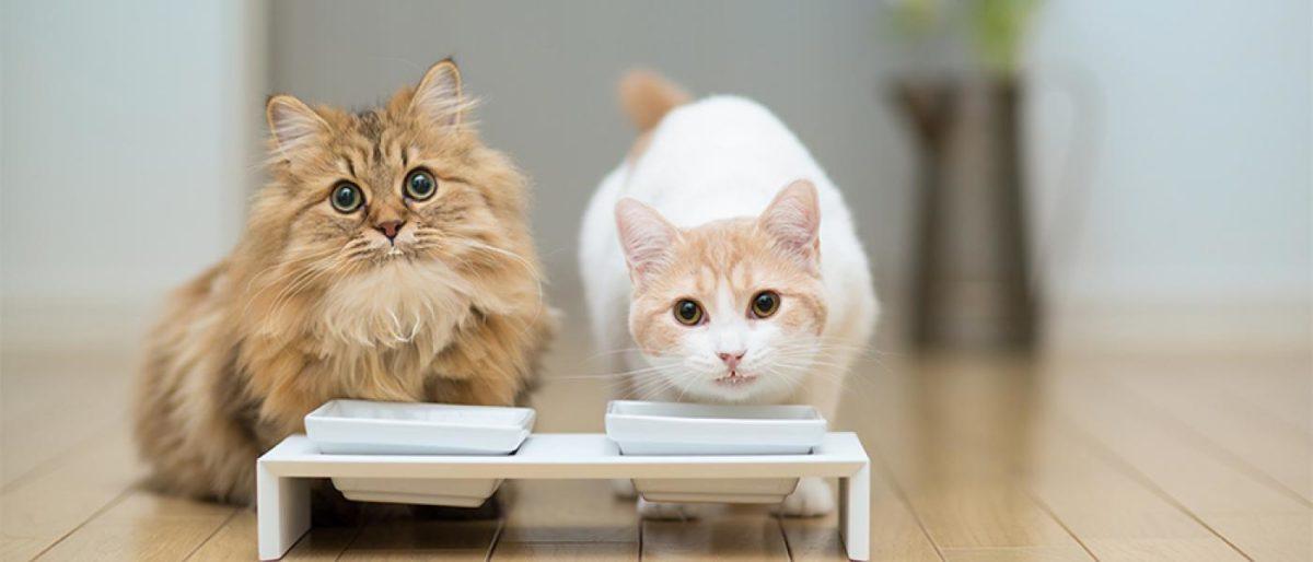 Cara Membuat Makanan Kucing Basah Rumahan Info Binatang