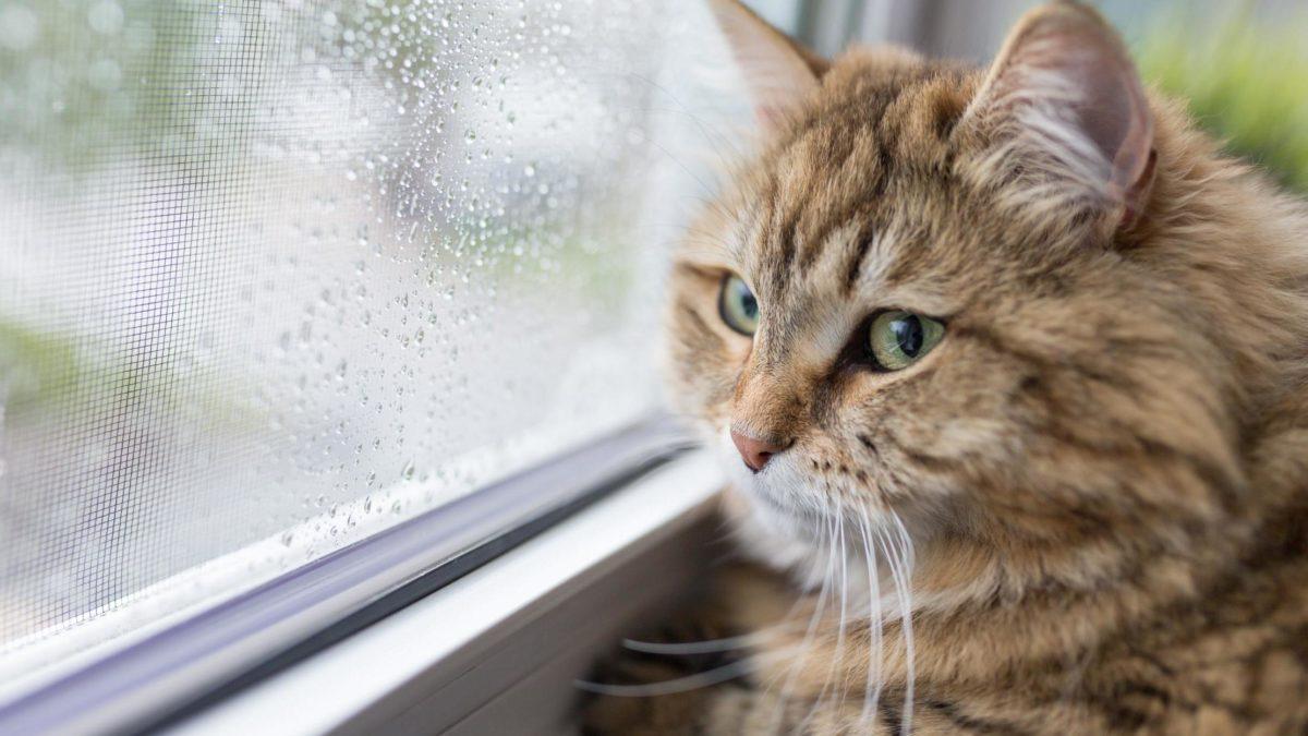 Ciri-Ciri Kucing Jamuran