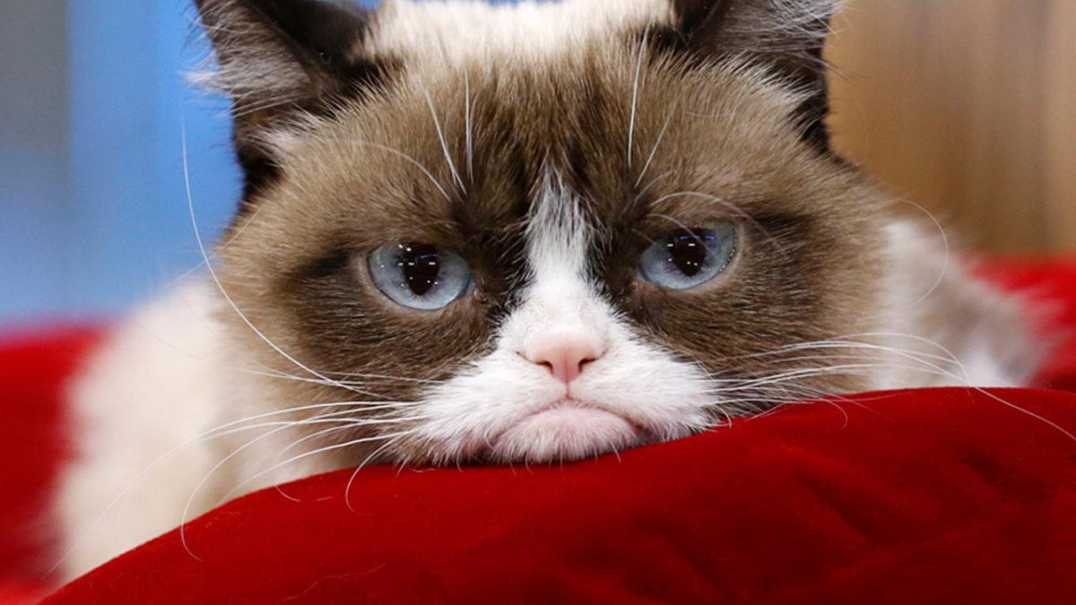 18 Cara mengusir kucing tanpa menyakiti dan tidak balik lagi