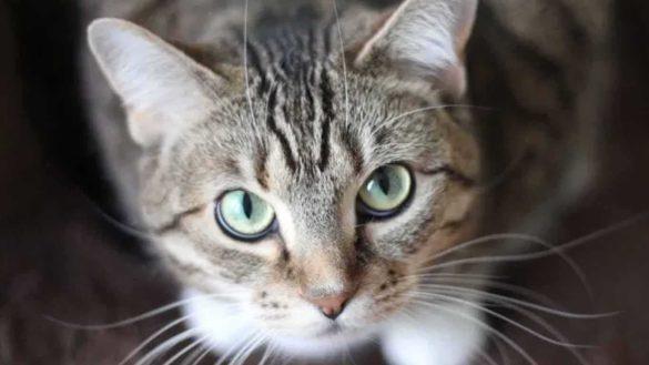 Salon kucing
