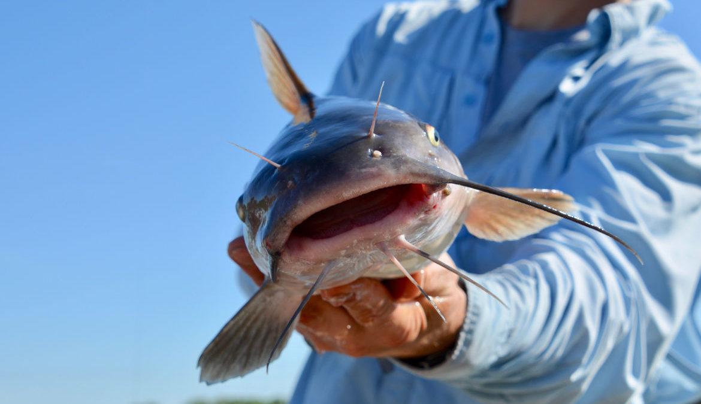 10 jenis ikan air tawar yang umum dikonsumsi