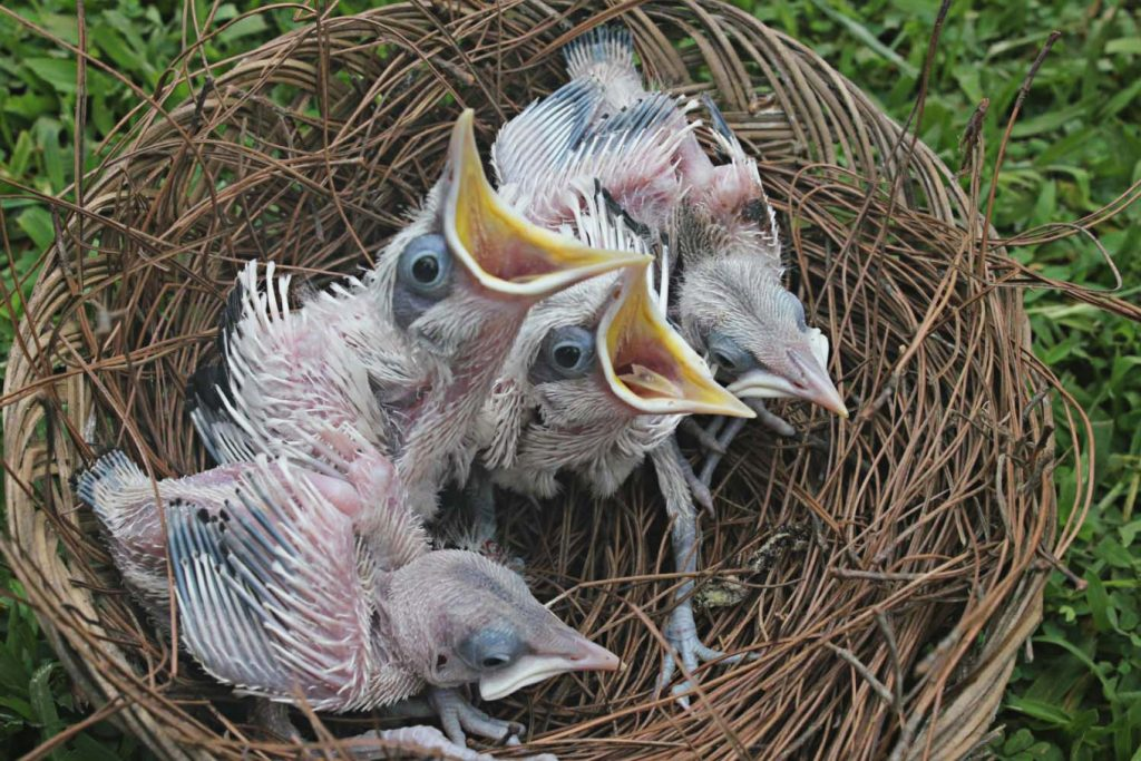 burung jalak bali 5